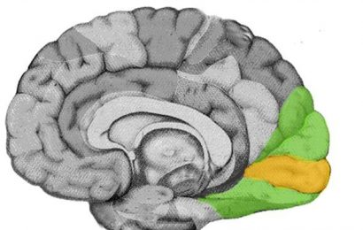Cartography of the visual cortex: Charting a new course for the organization of visual space