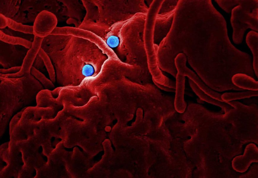 New study characterizes the gut virome